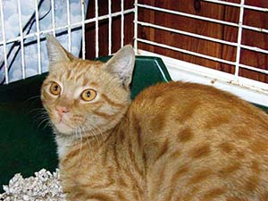gatto rosso cerca casa